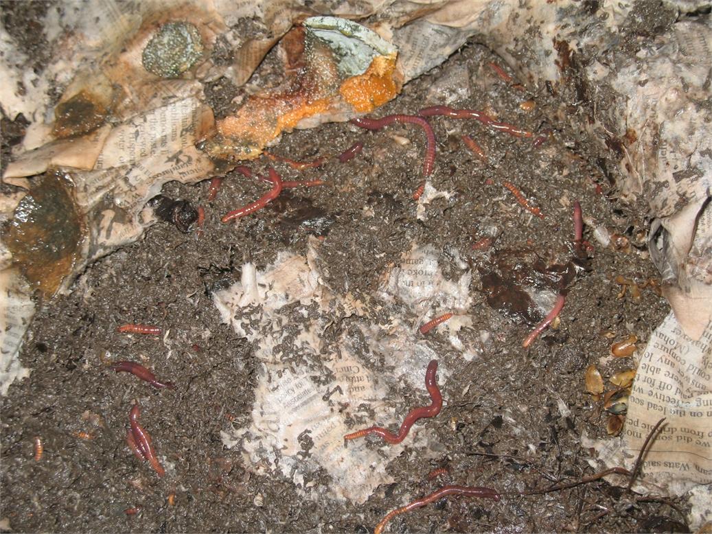 worm-bin-pics-videos-003